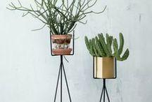Plants, planters, balconies