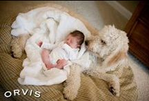 Golden Doodle Delights / All about golden doodles ... what's not to love?!!!