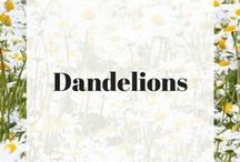 Dandelions / Our products feature our proprietary dandelion extract.