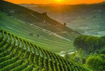 """Wine / """"Wine makes every meal an occasion, every table more elegant, every day more civilized.""""  ― Andre Simon"""