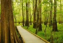 Congaree National Park / Are you planning a trip to Congaree National Park? Take Chimani with you! We develop 100% free mobile app travel guides for national parks and other outdoor destinations. No cell connection required! Download our apps for iOS and Android at http://www.chimani.com or in the App Store or on Google Play.