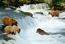 Katmai National Park / Are you planning a trip to Katmai National Park? Take Chimani with you! We develop 100% free mobile app travel guides for national parks and other outdoor destinations. No cell connection required! Download our apps for iOS and Android at http://www.chimani.com or in the App Store or on Google Play.