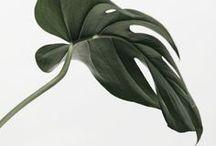 indoor Plants / Green Interior