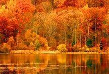 Seasonal Favorites / by Moriah Brantner