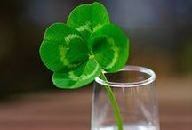 Happy St.Patrick's Day / by Deborah Jennings