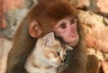 Lovely  Animals / by Aigul Erali