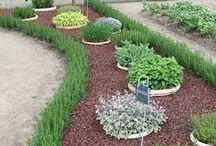 Gardening: Herbs / by Aigul Erali