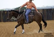 horse tricks & training