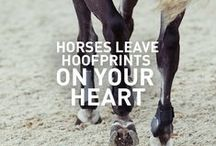 life long horse quotes