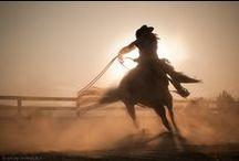 gallop, turn and burn