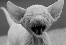 Make Me Laugh!!!