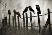 It's All About the Crow! / by The Primitive Hutch