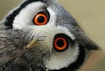 What a Hoot!!!
