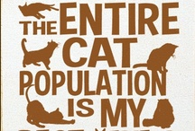 Cats!  purrr-fect ;)