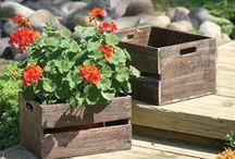 Pot it Up / Container garden ideas!
