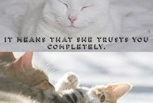 Meow / This board is all about cat memes, cute pictures and articles about taking care of cats and kittens.