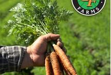On The Farm / A look at the farm who grows your favorite carrots.