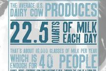 #DYK Dairy / Get your facts straight about the dairy industry!