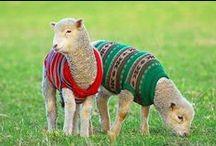 Insolite au tricot