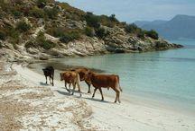 corsica la plus belle / toutes les régions de Corse