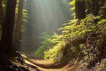 Hiking&nature ❤