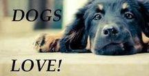 Doggie love / Dogs