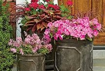 CONTAINER GARDEN INSPIRATION / Ideas, how to, containers, & beautiful inspiration / by Cheryl Brennan