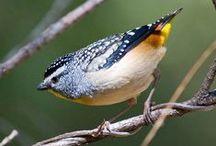 Birds of the North Coast / So many beautiful birds to enjoy on the North Coast of NSW