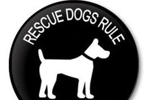 Rescue Dogs / The joys and humor of owing a dog.
