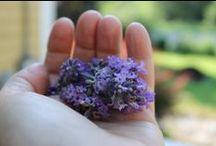 Dulse and Rugosa Botanicals / We grow or gather the botanicals we use in Dulse and Rugosa's natural skincare.
