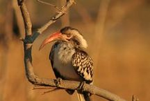 Birds of Africa / All these pictures I took in Africa, many of which required me to crawl through the bush on my tummy!