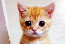 Kediler / Sevimli ve komik kediler