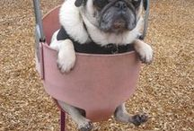 Pug Life ᵔᴥᵔ