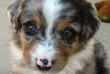 Sweet doggiessss / Dogs are one of my favorite animals!!  they are also one of the cuttest animals :)