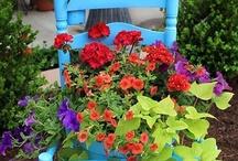 Garden Ideas / by Cindy Gerspacher