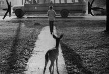 dearest deer...