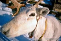 Lapponia in Finlandia / La Lapponia è la magica terra di Babbo Natale. La Lapponia è, inoltre, anche la regione più a nord della Finlandia.