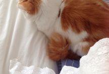< My cat >