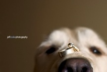 WeddingRings / Appoint the most perfect. / by Carla Fluorescent
