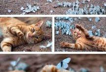 Či a či a či a či,či,čí-jsou to fotky kočičí