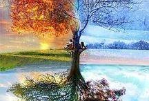 lente,zomer,herfst,winter