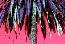Palm & Laser