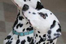 Dogs / Sobre imagem lindas de cachorros