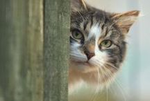 CATS / vi un lindo gatito !