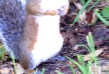 Squirrelz