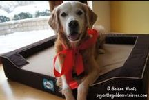 Gifts Ideas / Don't forget that your dog also expects gifs from you:)) Some ideas for gifts..