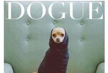 Dogs in Style / Fashionista dogs!!! :)))