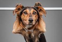 Exercises  / Exercizing dogs! WOW!