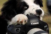 Doggies Hobbies