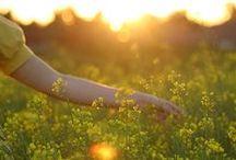 .SUNNY DAYS - DIAS DE SOL.
